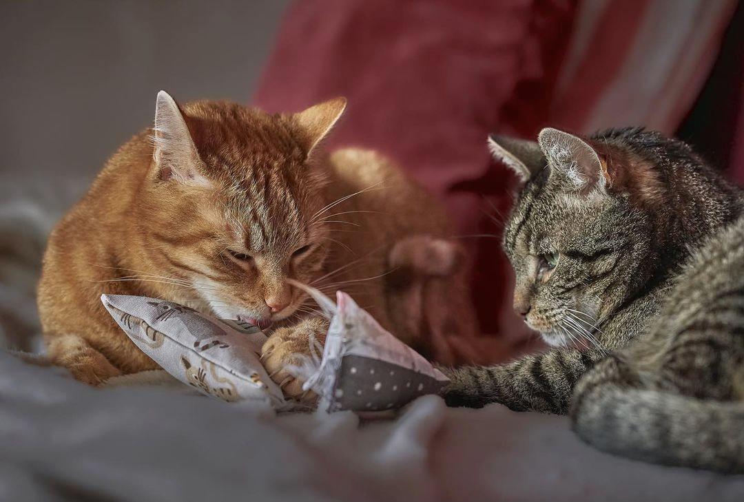 CATSIMO Cats