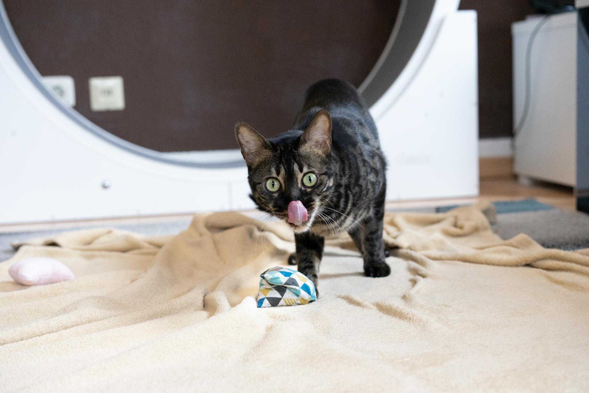 Matatabi Silvervine Catpy