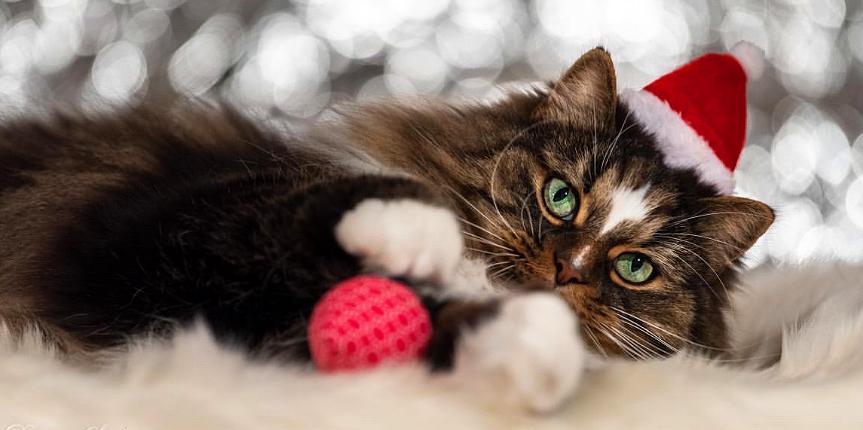 CATSIMO wünscht eine frohe Weihnachtszeit