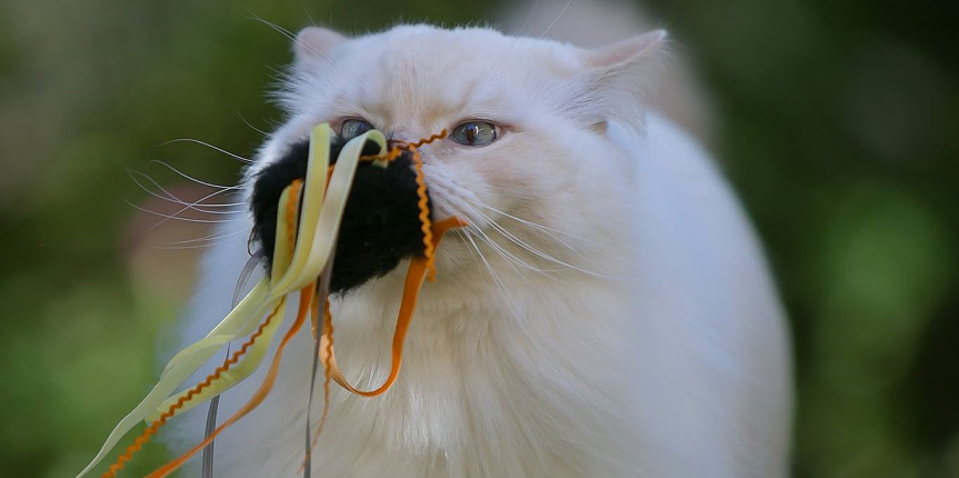 SPOOKY Cat Toys
