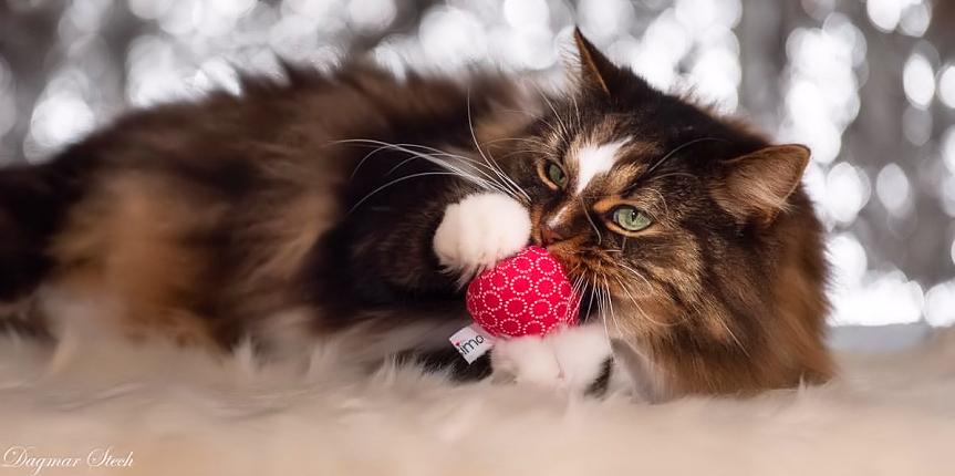 CATSIMO Kundenkatzen