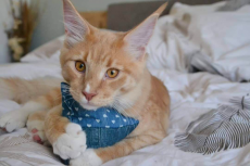 Spielkissen Jumbo Catpy (Dinkelspelz / Baldrian)