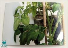 Katzen Postkarte Kimbi (15 x 10,5 cm)