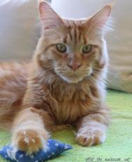 Knisterkissen für Katzen