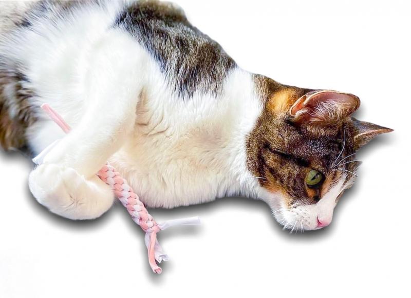 Zergel für Katzen (Weiss-Rose)
