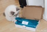 Überraschungsbox für Katzen