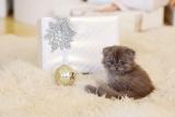 CATSIMO Weihnachtsbox für Katzen (2018)
