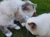 Katzenkicker Softy (Baldrian)
