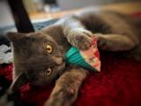 Spielkissen Cord Catpy (Dinkelspelz / Baldrian)