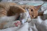 Spielkissen Baby Valentine  (Baldrian)