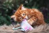 Spielkissen Triangle Catpy (Canvas)