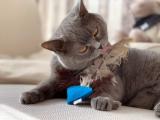Katzenspielzeug Funnel mit Straußenfedern