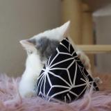 Spielkissen Jumbo Catpy (Canvas)