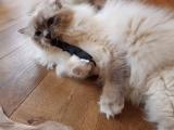 Katzenspielzeug Stinke-Fledermaus