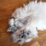 Spielkissen Matatabi Silvervine Catpy (Faultier)