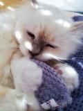 Catpy aus Waffelvelours/Plüsch (Matatabi)