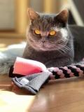 XL Fleece Zergel für Katzen (rosa-schwarz)