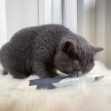 Katzenkicker Trigon (personalisierbar)