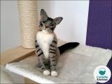 Ihre Katze aus Filz (30-35 cm)